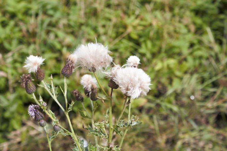 Angus & Bride: The Battle of Seasons